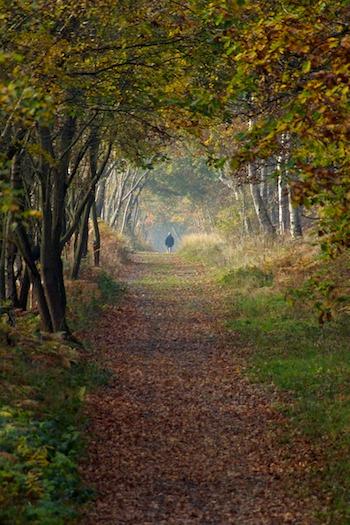 AutumnSherwood