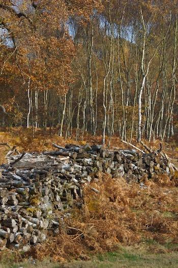 AutumnSherwood2