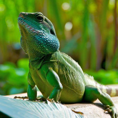 IguanaKewGardens