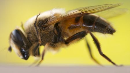 HoverflyProfile2