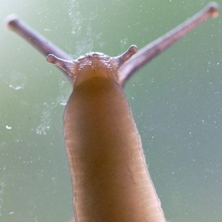 SnailThroughGlass