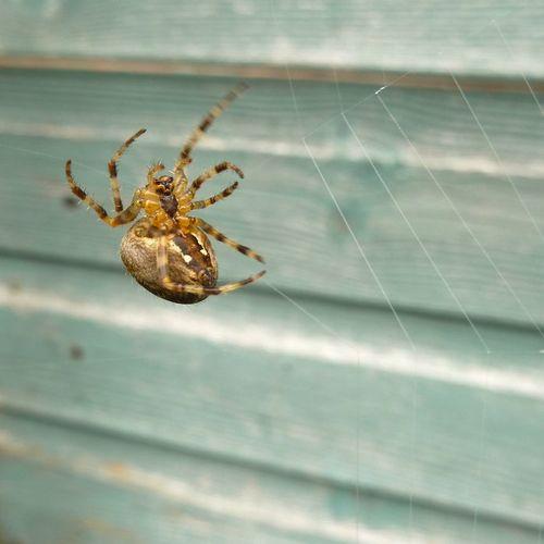 SpiderMakingWeb