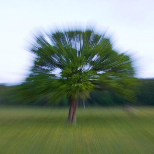 ZoomBlurTree