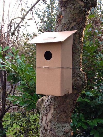 CardboardBirdboxInTree