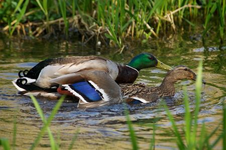 DuckyStyle