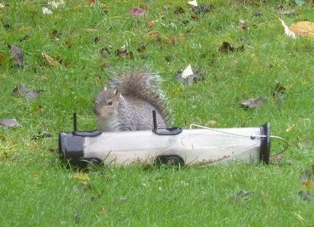 BirdFeederSquirrelAttack