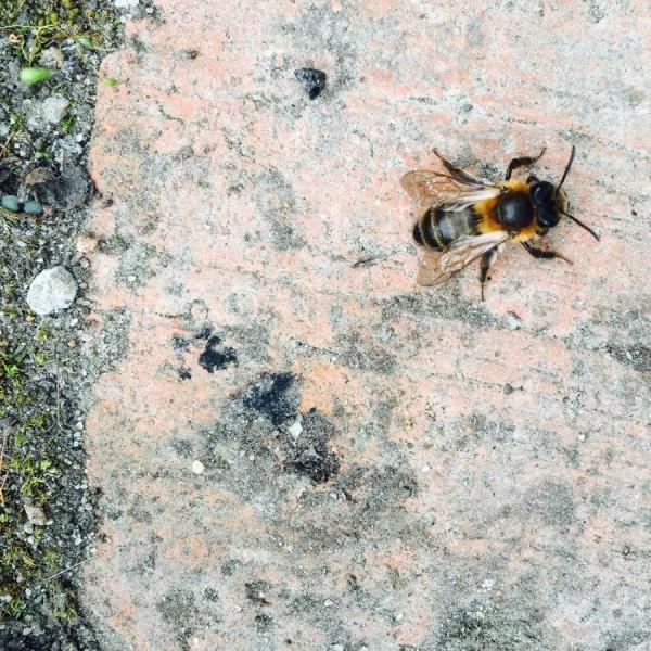 Arty Bee